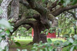 Emancipation Oak